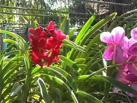 Flower Pot by Orchid Nursery At Thai Phuket Orchid Farm Youtube