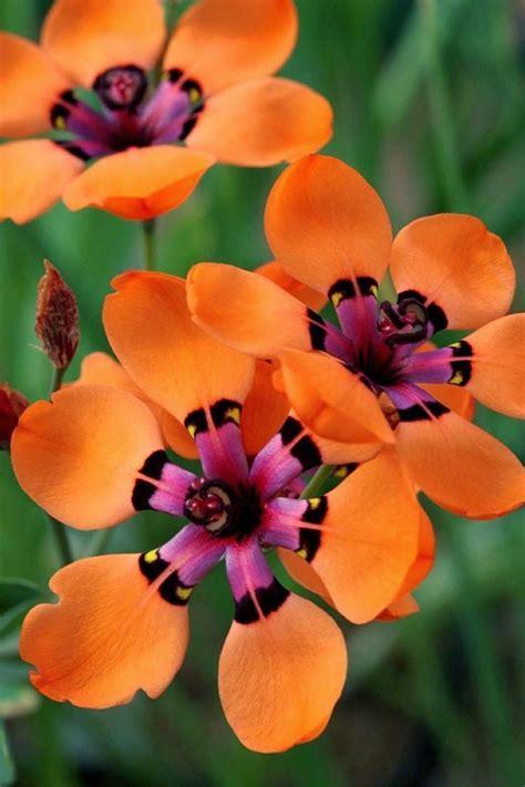 pretty orange 17 best images about amazing plants on pinterest flower