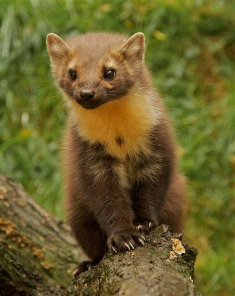 17 Best Images About On Martin O Malley - 17 best images about nugis marten on martin