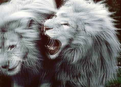 imagenes hipster de leones leones blancos tumblr