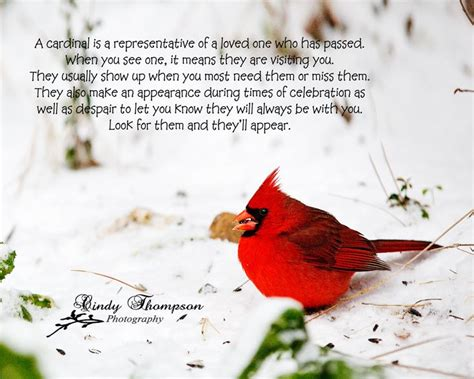 quotes about love and birds quotesgram quotes about cardinal birds quotesgram