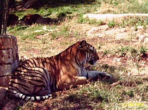 ingresso zoo safari zoosafari fasano sconto sull ingresso al safari parksmania