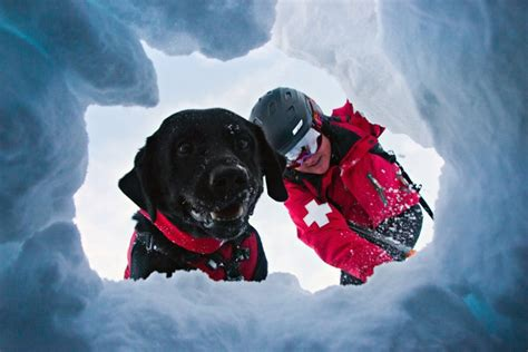 resue dogs avalanche rescue dogs kircher
