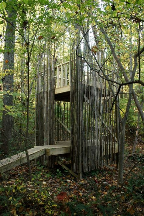bamboo trees for backyard 29 best images about playhouse on pinterest kids cubby