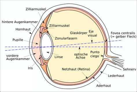 Beschriftung Des Auges by Freies Lehrbuch Biologie 05 06 Das Linsenauge Der Wirbeltiere