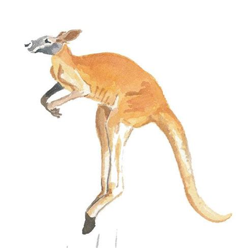 kangaroos original kangaroo watercolor original painting troline animal