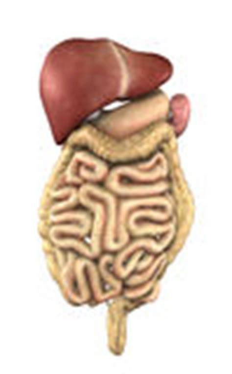 anatomia umana immagini organi interni anatomia umana organi interni illustrazione di stock