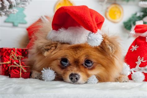 Christmas Gift Ideas for Pet Lovers   Celeb Teen Laundry