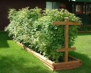 Gourmet Garden Arbor News Raspberry Trellis Search Fruit Vegetable