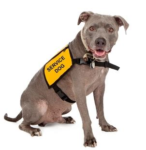how to get a service dogs how to get a service for anxiety or depression the costs of it