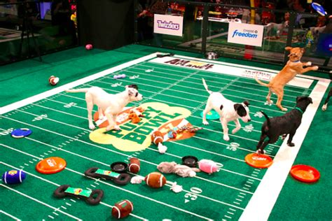 puppy bowl live quot puppy bowl quot live in sf ferry building funcheapsf