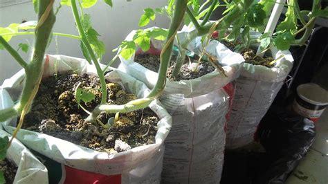 update #2 Make free DIY self watering grow bag for