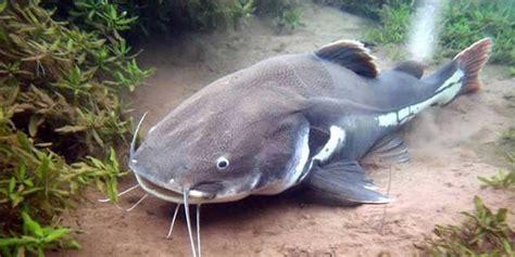 amazon river animals wildlife catastrophe at amazon dam a warning for future
