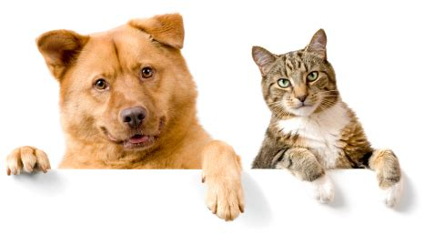 cat people vs. dog people | siowfa15: science in our world
