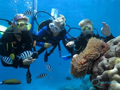 scuba dive great barrier reef diving on the great barrier reef scuba dive cairns and