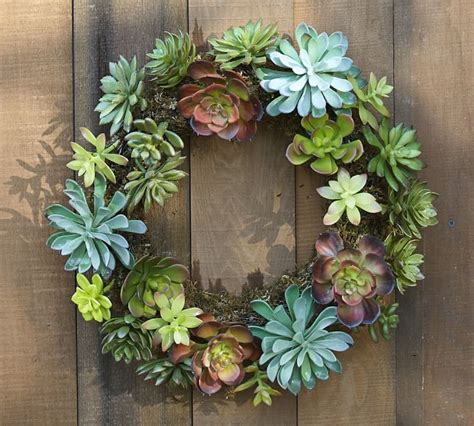 decorating  succulents pottery barn