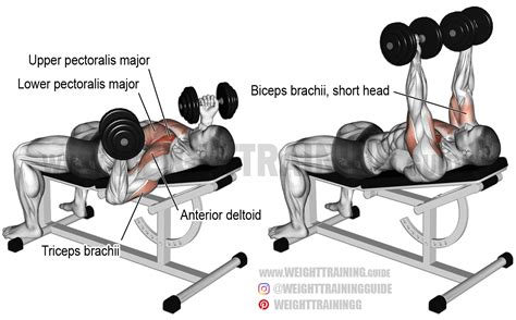 muscles used in incline bench press incline reverse grip dumbbell bench press exercise