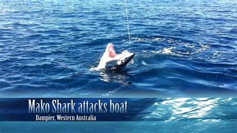 mako shark boats mako shark attacks boat mp4 doovi