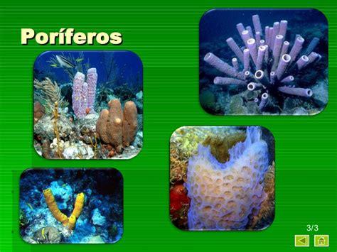 imagenes de animales poriferos animales invertebrados