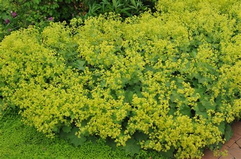 flowering shrubs for clay soil top 10 plants for clay soil the garden