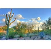 Free Download Arizona Background – Wallpapercraft