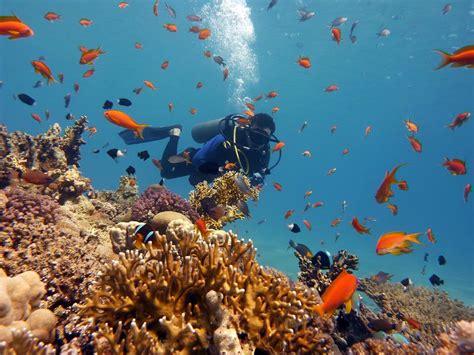 dive sea sea diving taba dive trips sea diving