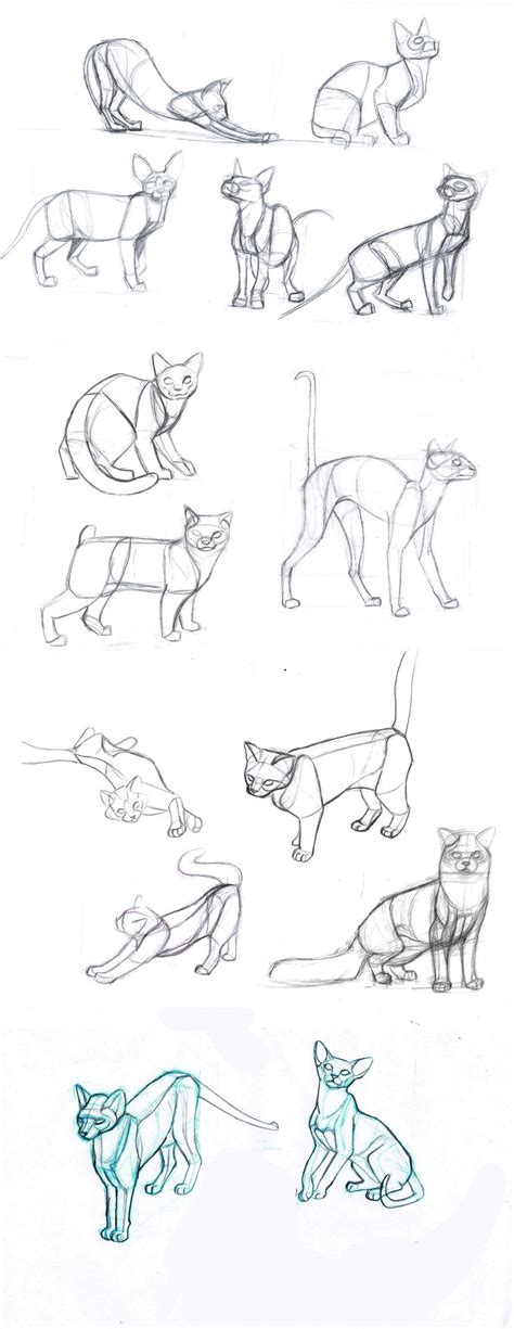 how to draw new year animals cat s by sofmer on deviantart