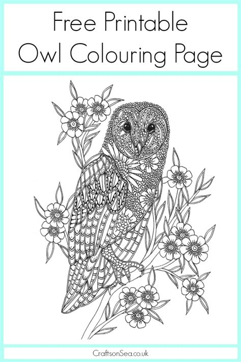 willow s world coloring book owls books free owl colouring page crafts on sea