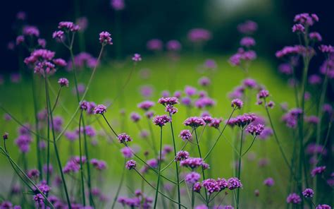 small flower plants mysterious purple small flowers desktop wallpapern 5