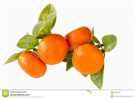 new year oranges orange new year stock image image 30939241