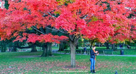 falling on tamarind trees a travelogue of books boston fall foliage tours 7 best in the city