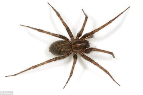 how to kill spiders in house bridgend woman accidentally sets her house on fire while
