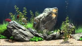 free aquarium wallpapers pixelstalk net