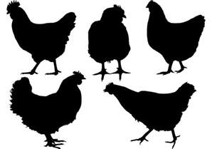 free silhouette images free chicken silhouette vector free vector