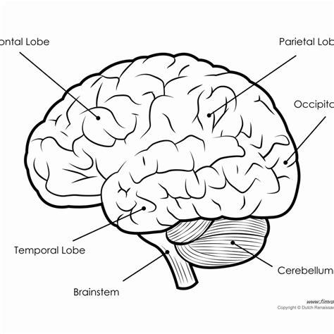 brain diagram worksheet parts of the brain worksheet answers worksheet resume