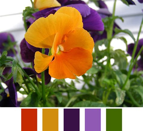 purple and orange color scheme color scheme ideas archives cortney north fine art