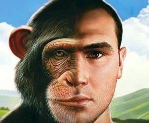alimentazione scimmie come 232 cambiata la dieta dalle scimmie al genere