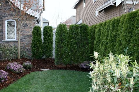 outdoor noise blocking plants  images small yard