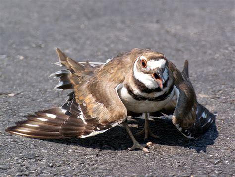 wild birds feeding questions answers quiet corner