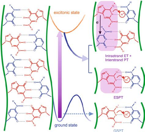 Proton Coupled Electron Transfer by Llustration Of Possible Proton Transfer And Proton Coupled