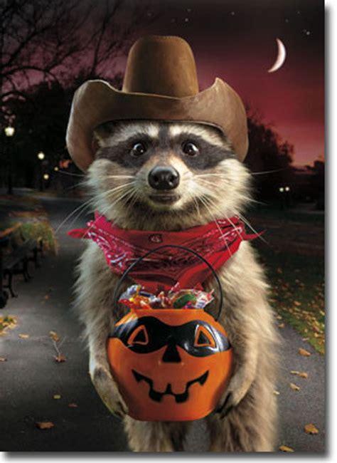 raccoon cowboy standout stand  pop  halloween card  avanti press ebay