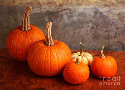 decorative pumpkins small decorative pumpkins photograph by verena matthew