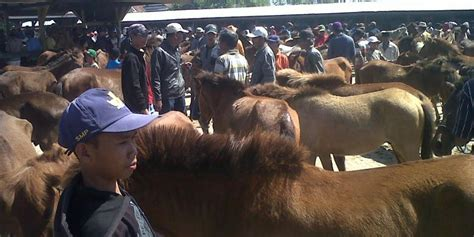 Jual Sho Kuda Di serunya transaksi jual beli kuda di pasar kuda tolo kompas