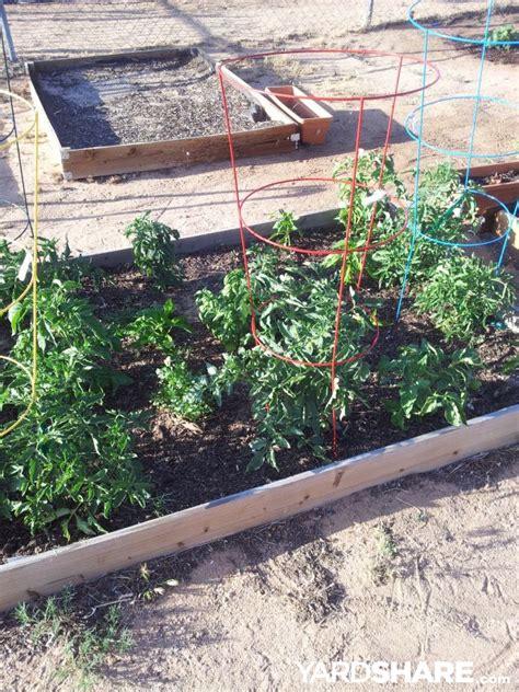 Desert Vegetable Gardening Landscaping Ideas Gt Desert Vegetable Garden Yardshare