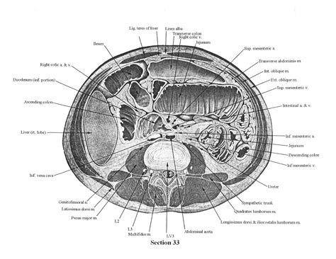 cross sectional anatomy quiz ct cross sectional anatomy quiz 28 images thorax cross