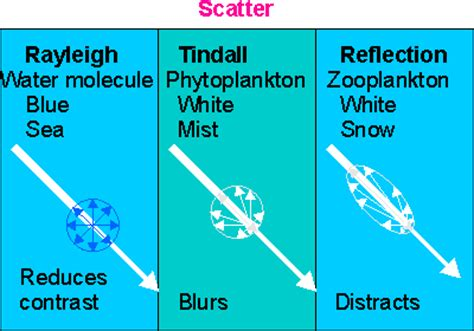 How Does Light Behave When It Interacts With Matter by Water And Light