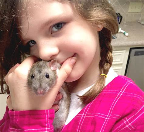 good house dogs for kids rats as pets are rats a good pet for kids clumsy crafter