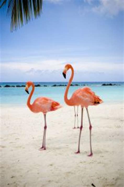 aruba caribbean beaches