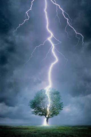 when is the tree lighting image lightning tree jpg the hunger wiki wikia