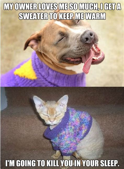 Funny Dog And Cat Memes - dog vs cat sweaters weknowmemes